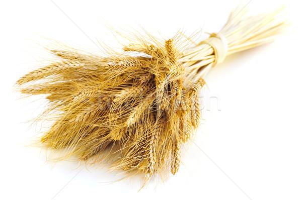 Isolato grano orecchie grano bianco Foto d'archivio © elenaphoto