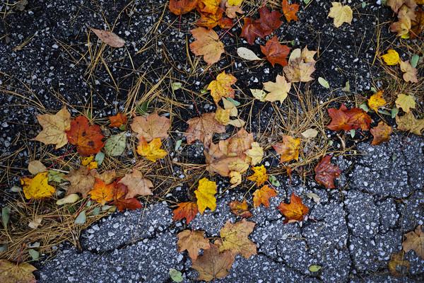 Fall leaves on pavement Stock photo © elenaphoto