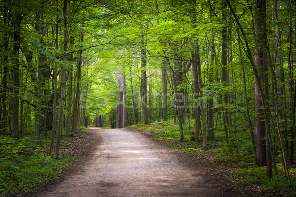 Hiking trail in green forest Stock photo © elenaphoto