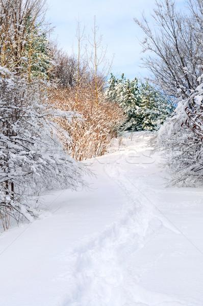 Path in winter forest Stock photo © elenaphoto