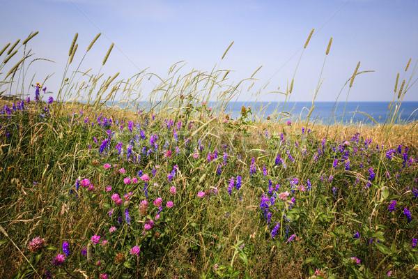 Vadvirágok nyár legelő óceán part Prince Edward-sziget Stock fotó © elenaphoto