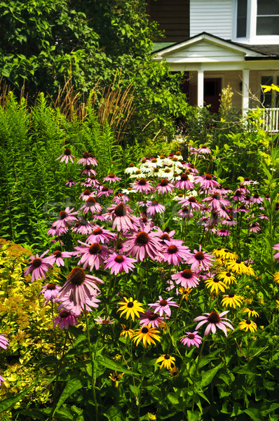 Woon- tuin landscaping paars bloem natuur Stockfoto © elenaphoto
