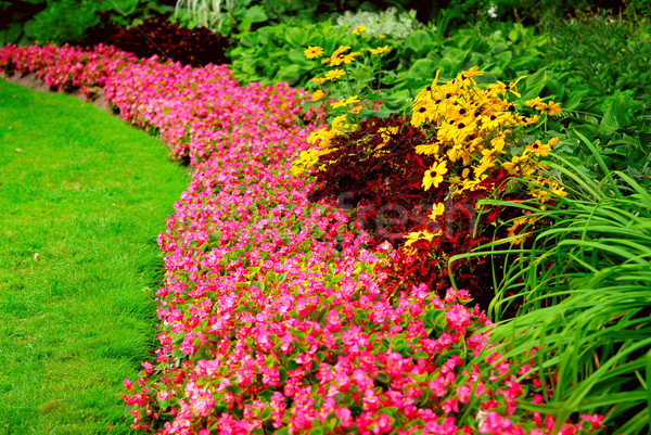 Jardim flores tarde verão grama Foto stock © elenaphoto