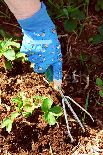 Gardening Stock photo © elenaphoto