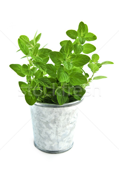 świeże zioła oregano herb wiadro Zdjęcia stock © elenaphoto
