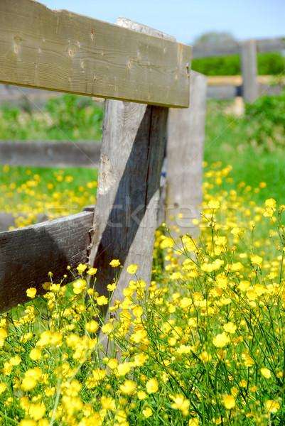 夏 草原 黄色 成長 ファーム フェンス ストックフォト © elenaphoto