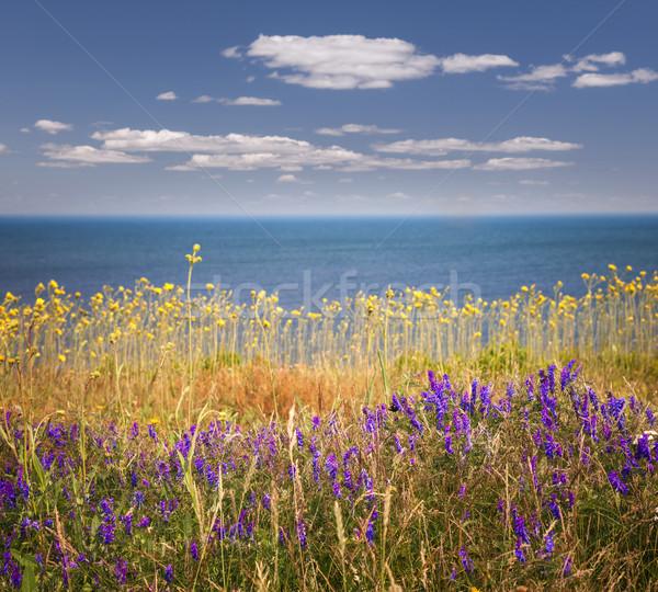 Vadvirágok óceán part Prince Edward-sziget Kanada égbolt Stock fotó © elenaphoto