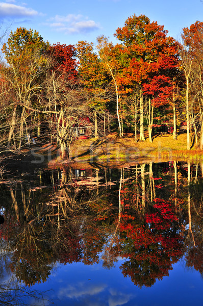 Fall forest reflections Stock photo © elenaphoto