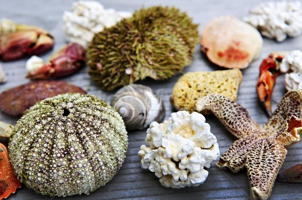 Stock photo: Sea treasures