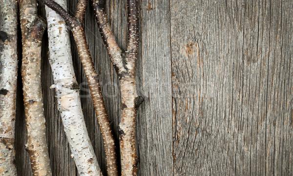 樺 木 ツリー トランクス 自然 ストックフォト © elenaphoto