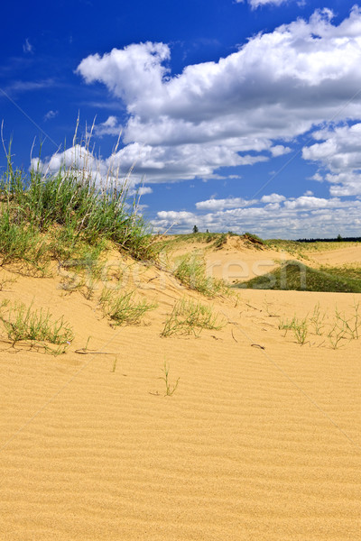 Stock photo: Desert landscape in Manitoba, Canada