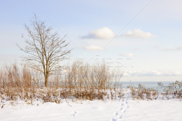 Inverno shore lago ontario parco Toronto Foto d'archivio © elenaphoto