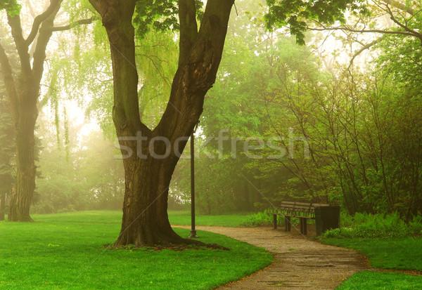 Park yol yeşil bahar çim Stok fotoğraf © elenaphoto