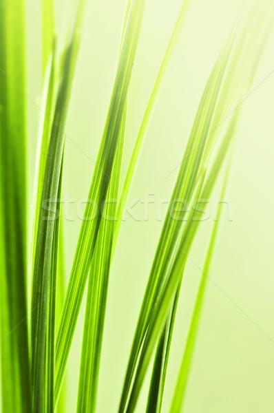 Zöld fű természetes közelkép fű absztrakt természet Stock fotó © elenaphoto