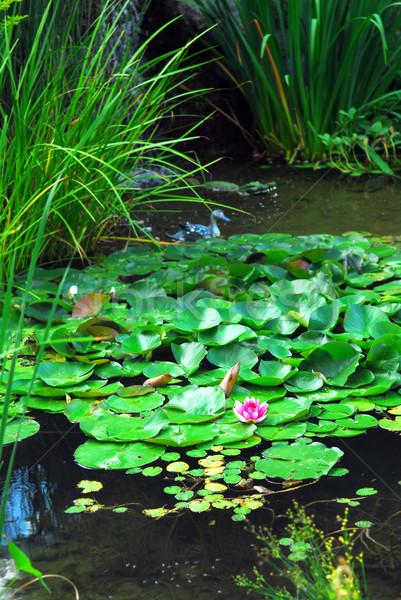 Landschap vijver aquatisch planten water lelies Stockfoto © elenaphoto