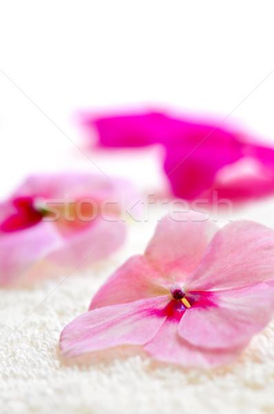 花 高級 タオル 新鮮な ストックフォト © elenaphoto