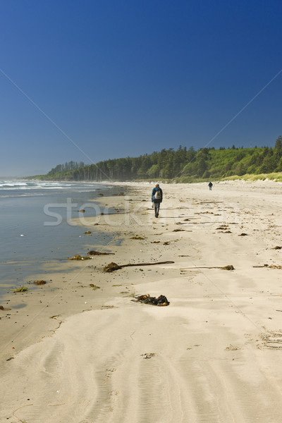 Sandy beach in Pacific Rim National Park in Canada Stock photo © elenaphoto