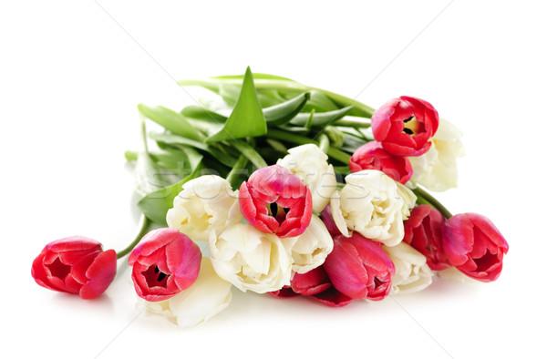 Rosso bianco tulipani bouquet isolato sfondo Foto d'archivio © elenaphoto
