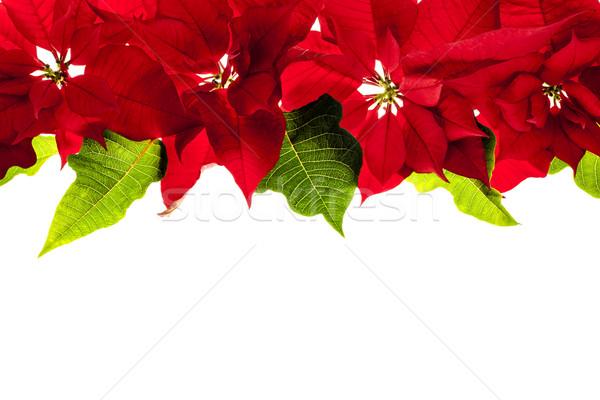 Stock photo: Christmas border with red poinsettias