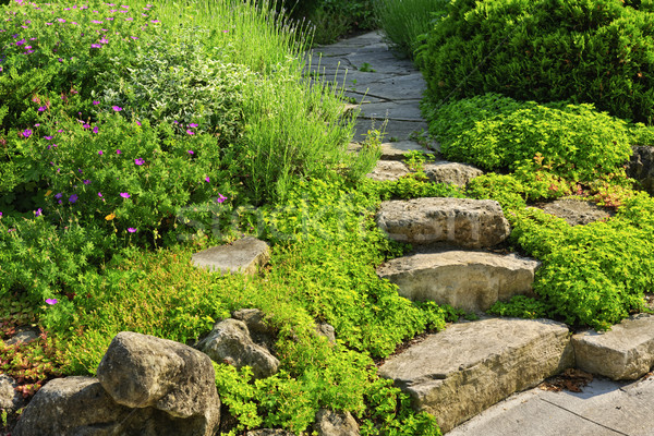 Garden path with stone landscaping Stock photo © elenaphoto