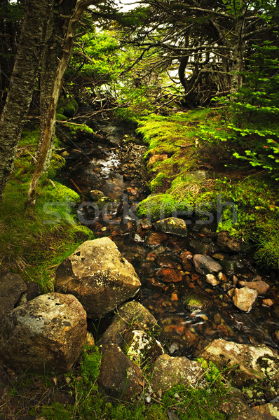 Forest creek Stock photo © elenaphoto