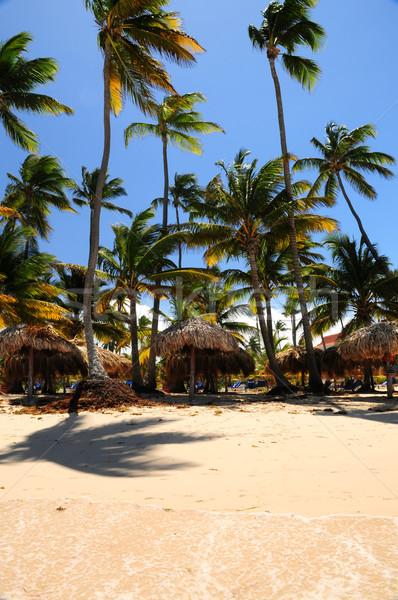 Praia tropical palmeiras guarda-chuvas caribbean ilha praia Foto stock © elenaphoto