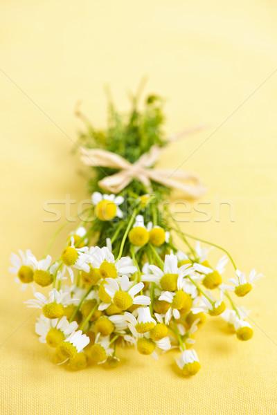 Chamomile flowers Stock photo © elenaphoto