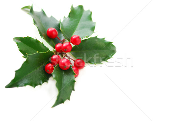 Christmas Holly Stock photo © elenaphoto
