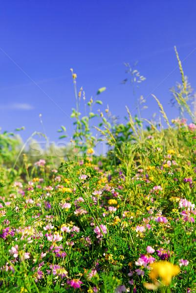Zomer weide groene Stockfoto © elenaphoto