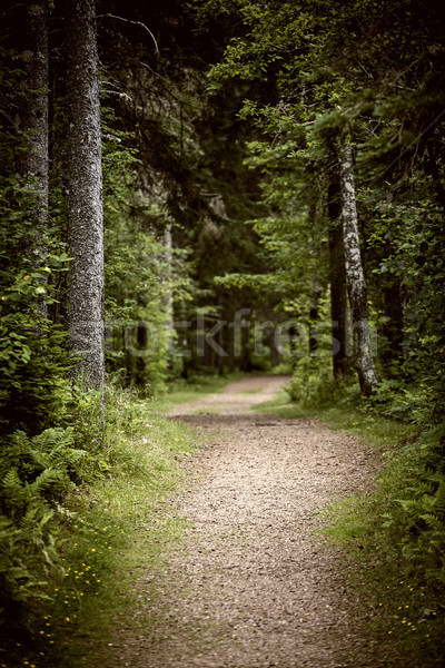 Path in dark moody forest Stock photo © elenaphoto