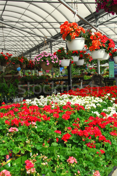 Greenhouse Stock photo © elenaphoto