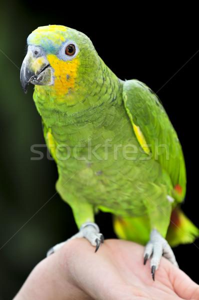 Amazon papağan sarı kuş yeşil kuşlar Stok fotoğraf © elenaphoto