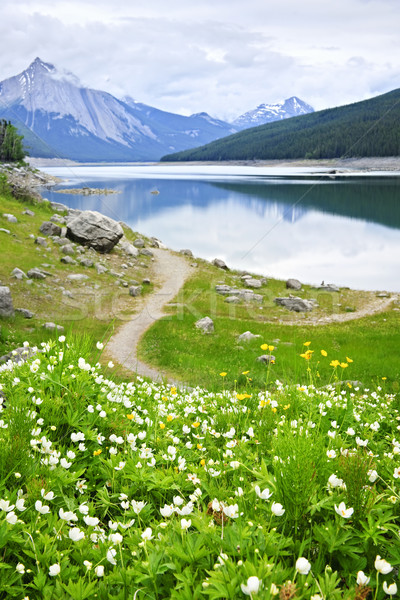 Mountain lake in Jasper National Park, Canada Stock photo © elenaphoto