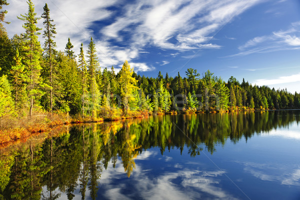 Forest reflecting in lake Stock photo © elenaphoto