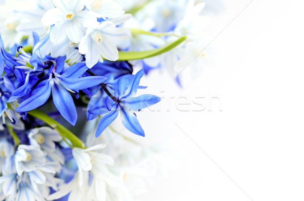 Spring flowers background Stock photo © elenaphoto