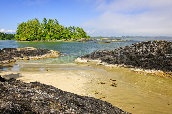 Coast of Pacific ocean, Vancouver Island, Canada Stock photo © elenaphoto