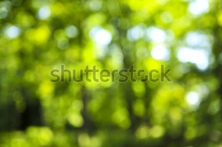 緑 自然 外に フォーカス 森林 ぼけ味 ストックフォト © elenaphoto