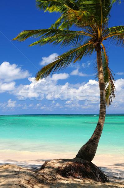 Beach of a tropical island Stock photo © elenaphoto
