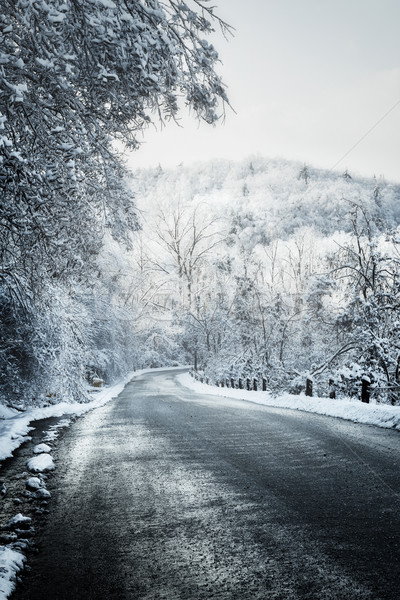 Winter road in forest Stock photo © elenaphoto