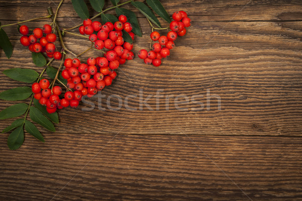 Stock photo: Mountain ash berries over wood