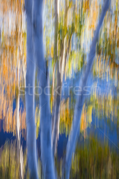 Blue birches by the lake Stock photo © elenaphoto