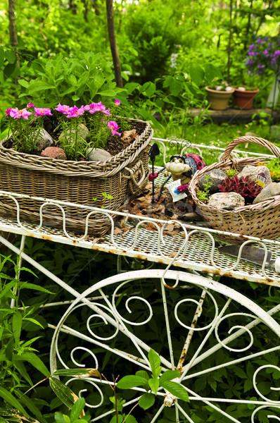 цветок корзины саду два лет цветы Сток-фото © elenaphoto
