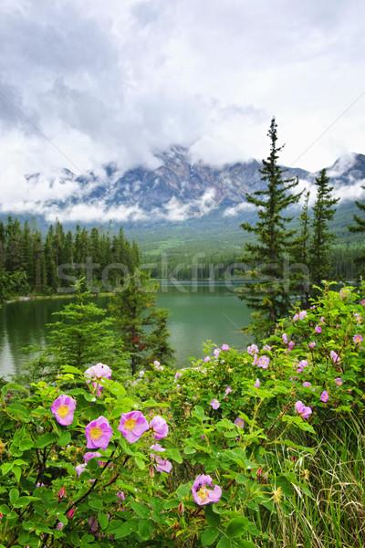 Wild roses and mountain lake in Jasper National Park Stock photo © elenaphoto