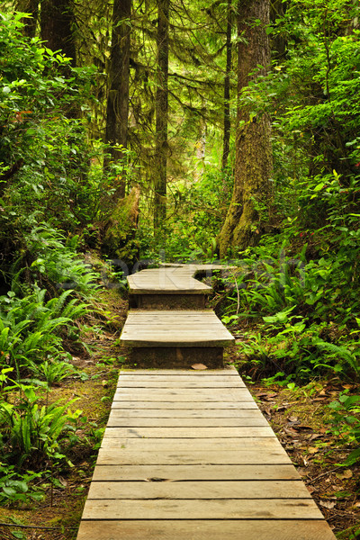 Path in temperate rainforest Stock photo © elenaphoto