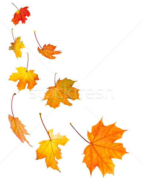 Fall maple leaves background Stock photo © elenaphoto