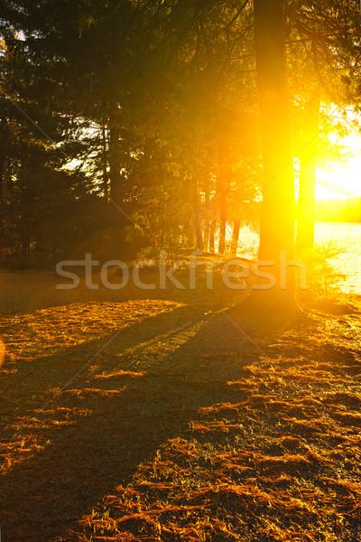 Sunshine in evening forest near lake Stock photo © elenaphoto