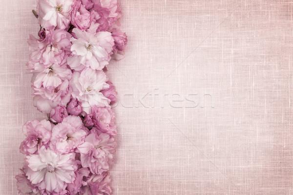 Cseresznyevirágzás keret rózsaszín vászon csetepaté virágok Stock fotó © elenaphoto