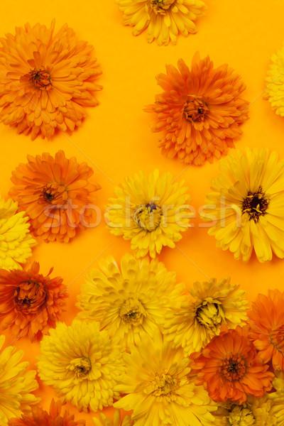 Flores naranja fondo medicina Foto stock © elenaphoto