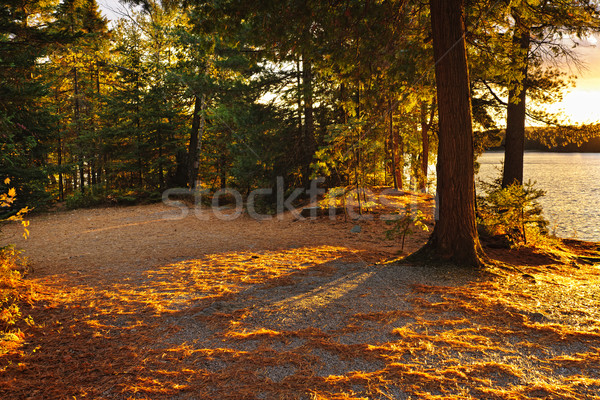 Autumn trees near lake Stock photo © elenaphoto