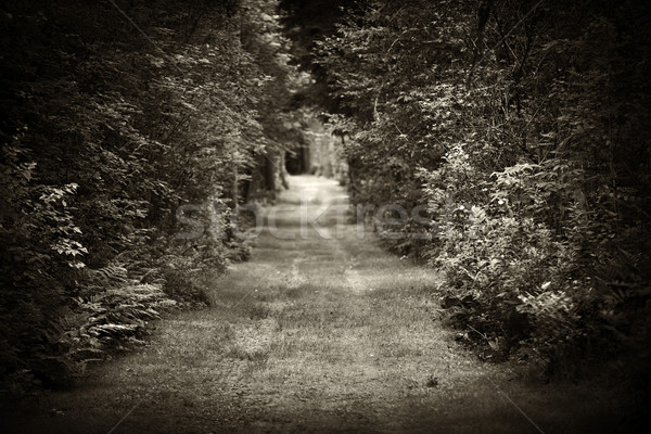 Stock photo: Dirt road through forest